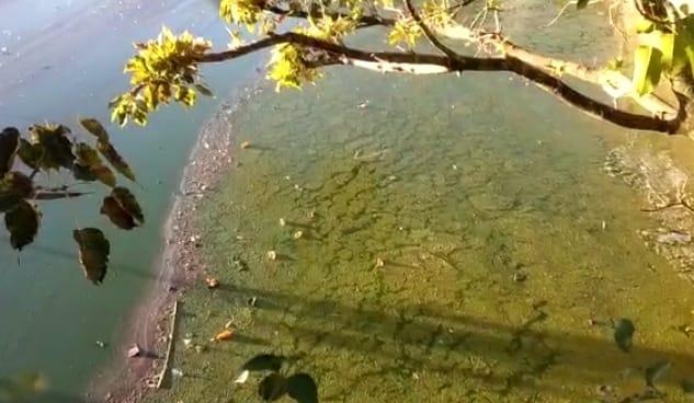 cee4f84a 27b8 4751 8a7d 24898b3d74cd नक्की झील की सुंदरता में काई जमने से लग रहा है दाग, जानें सफाई के लिए अपनाई जाएंगी कई योजनाएं